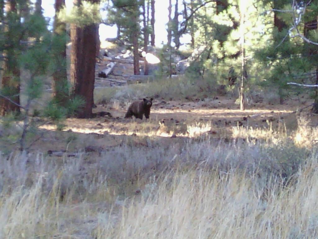 Bear at Spooner